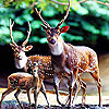 Deers family slide puzzle